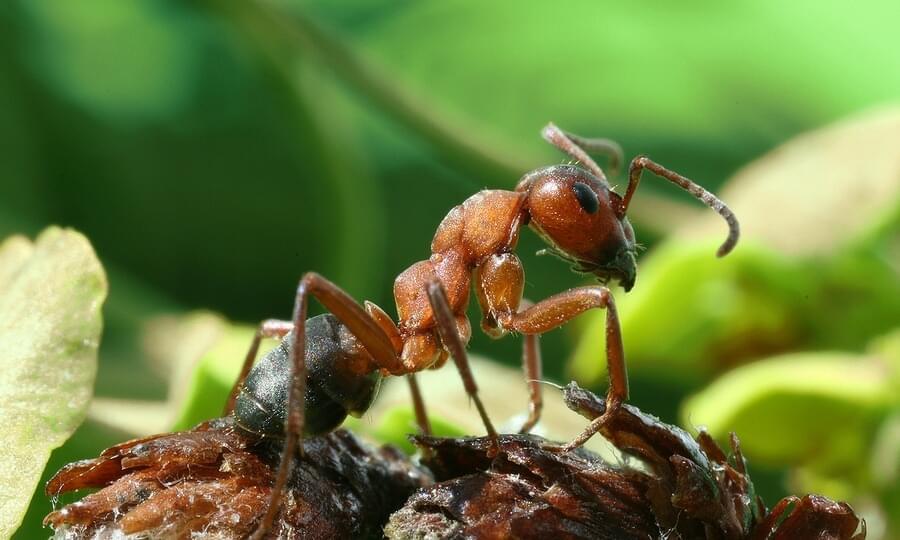 Ферма муравьев для новичков