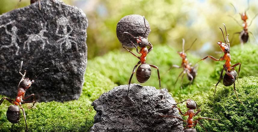 Как выбрать муравьиную ферму/формикарий для муравьев