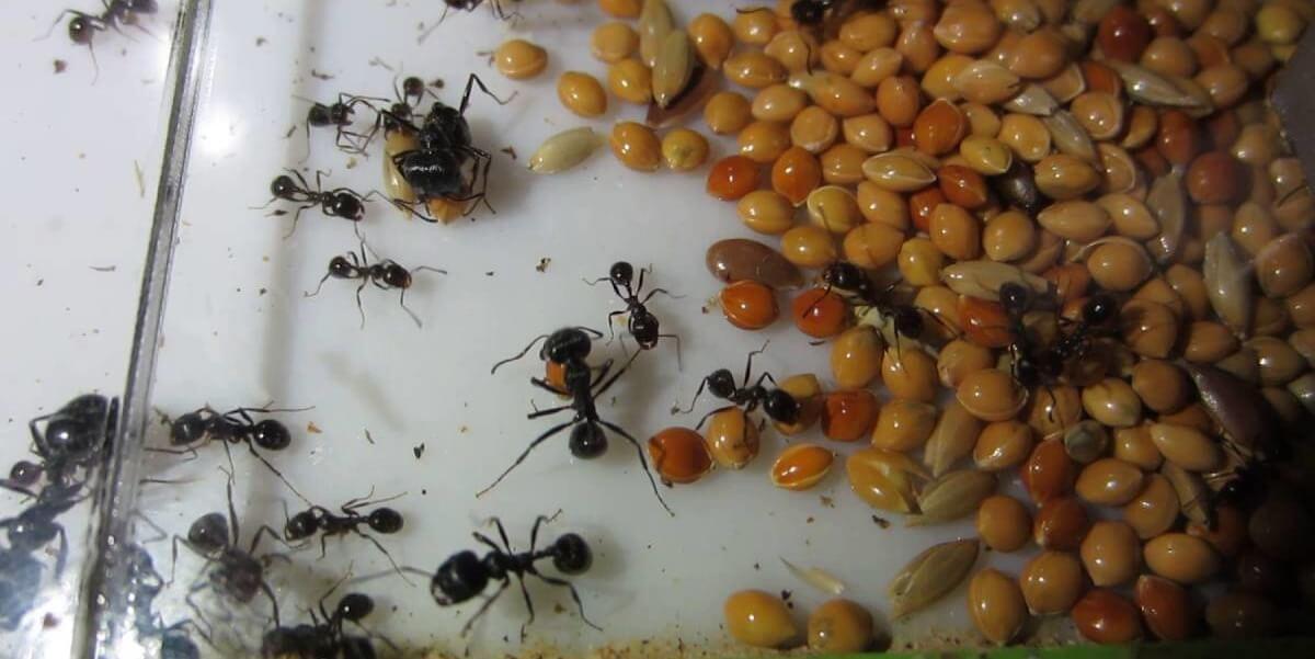 Купить корм для муравьев